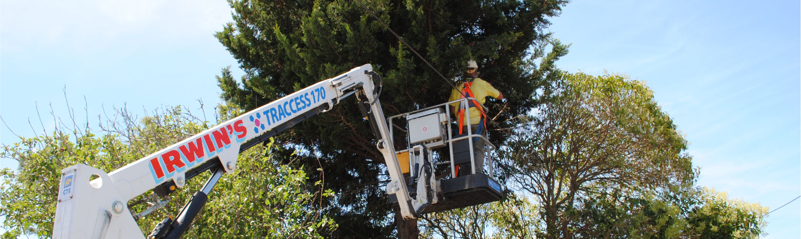 Irwins Tree Removal Geelong 1800 801 942